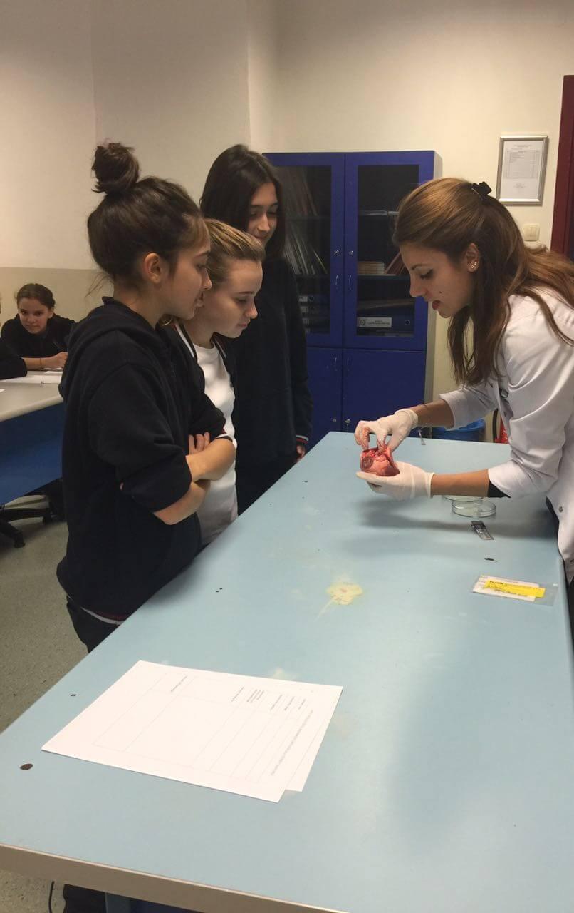 6. Sınıf Öğrencilerimiz Fen ve Teknoloji Dersi'nde Kalbin Yapısını Öğrendiler