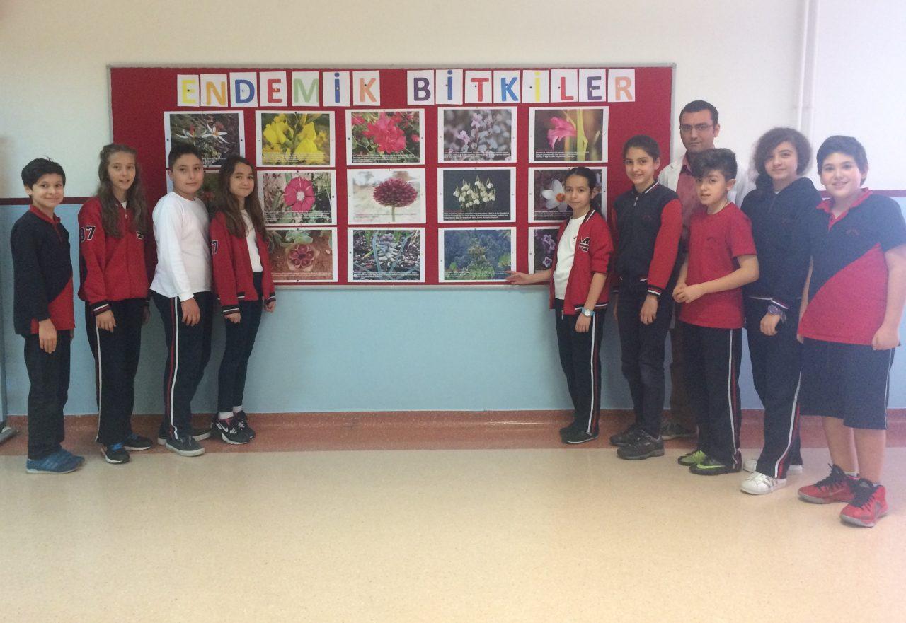 6. Sınıf Öğrencilerimiz 'Türkiye'deki Bioçeşitlilik ve Endemik Bitki Çeşitliliği' Konulu Proje Çalışmasını Sergilediler