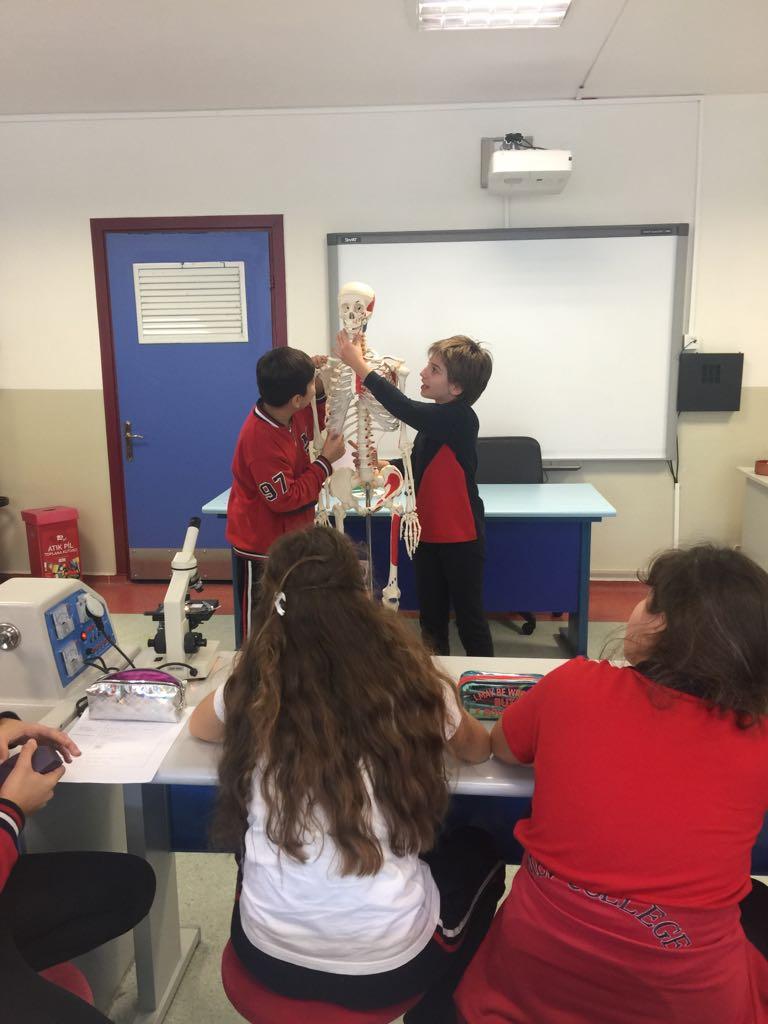 6. sınıf Öğrencilerimiz İskelet Sistemini İnceledi